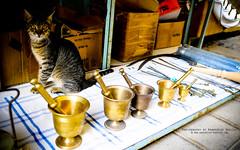 Cypriot Cat (photoByKS) Tags: street cat nikon cyprus tools boxes d300 cypriot nicosia 175528 nikkor175528 photobyks