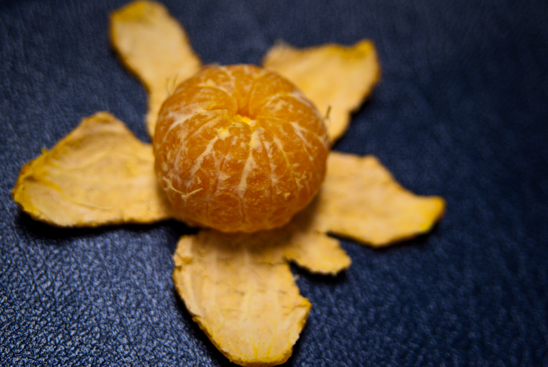 Day 137: Clementine Flower