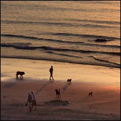 Good moments  at sunset (Pilar Azaa Taln ) Tags: sunset espaa beach dogs atardecer spain playa perros cantabria sanvicentedelabarquera peoplewalking marcantbrico pilarazaataln personaspaseando copyrightpilarazaataln
