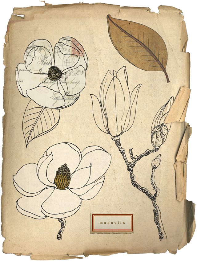 Magnolias digital collage