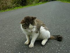 DSCN3246 (pladge_atsuko) Tags: cats sendai matsushima miyagi