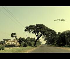 On the City Outskirts.. (D | E | E | P | A | K) Tags: road city tree canon rebel highway lone hanging biker outskirts coimbatore 500d kovaipudur t1i canonrebelt1i deepakprakash etimadai