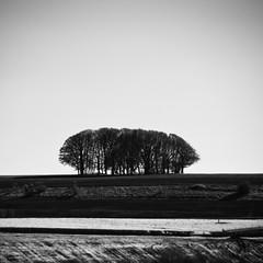 Trees on the Ridge (IR) (J e n s) Tags: uk trees bw square ir march pentax infrared 2010 zoomlens da18250 istdsir jrpq irwithmodifiedcamera