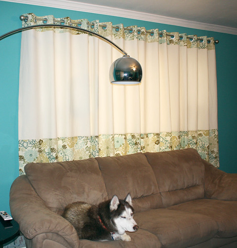 My curtains and the husky
