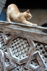 Fès : Medersa el-Attarine (-AX-) Tags: cat chat morocco fez maroc medina fès médina medersa elattarine
