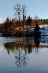 In the water (Karmen Smolnikar) Tags: trees snow reflection nature water slovenia slovenija yourwonderland