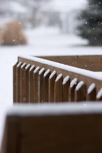 spring snow 014-1