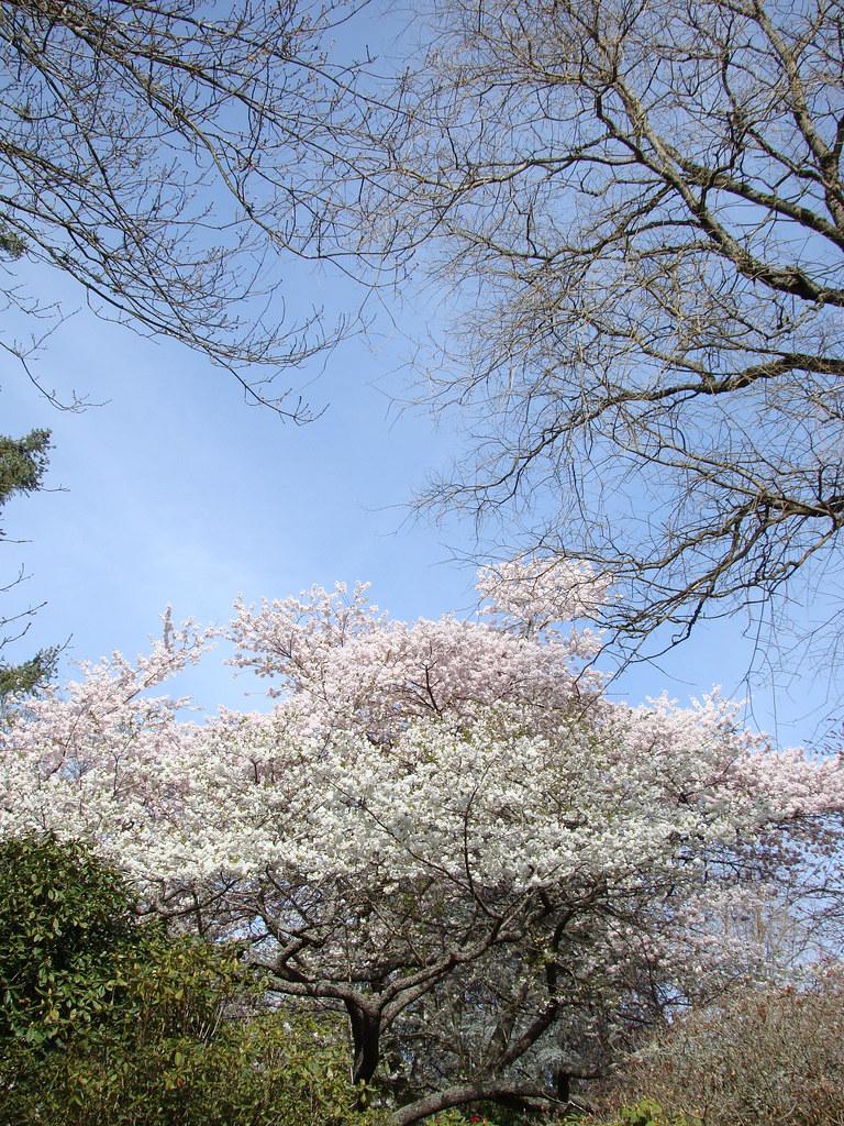 Rhododendren Gardens