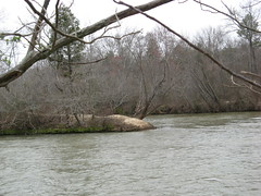 Island in the Yadkin Photo