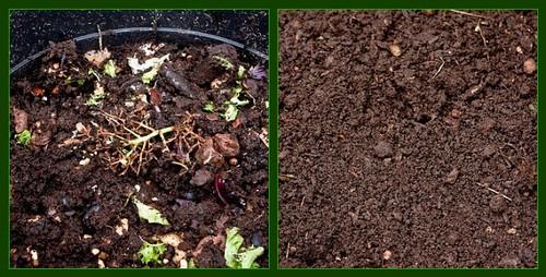 Vermiculture Composting