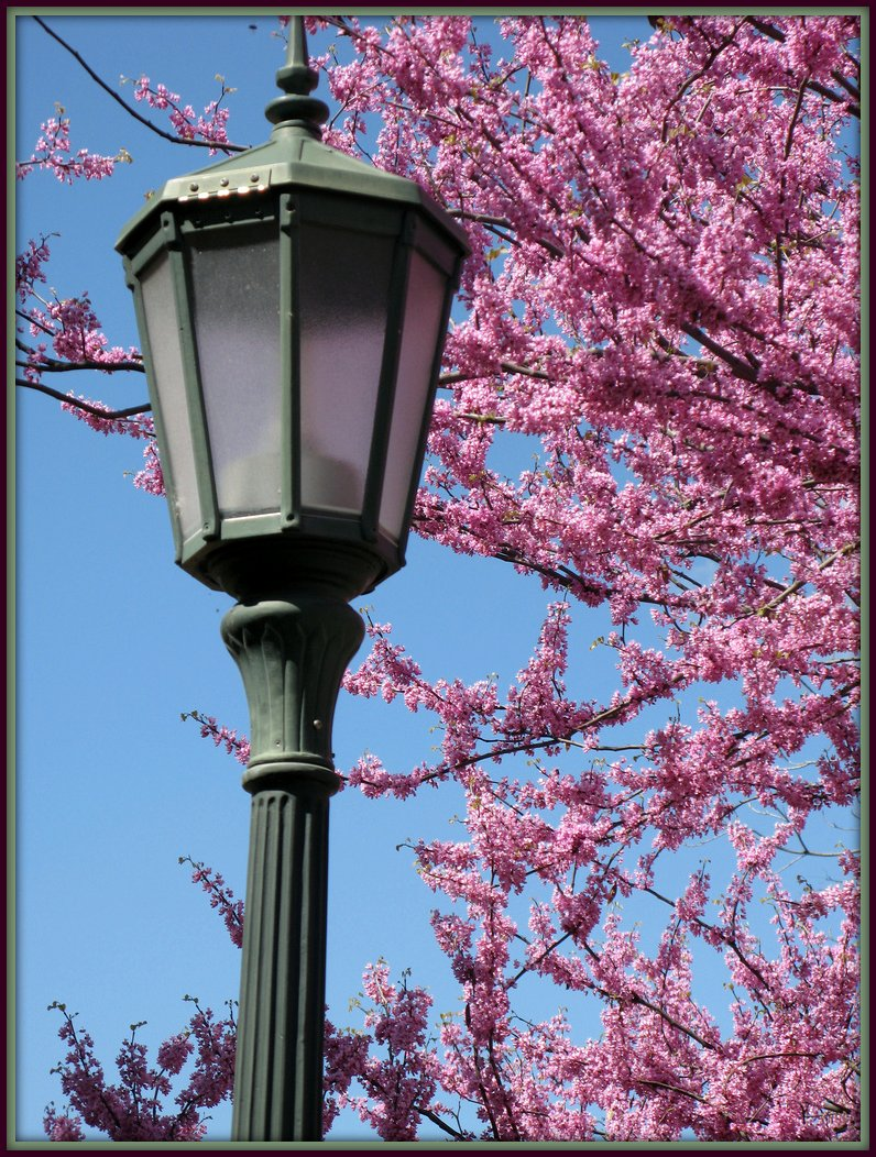 lightening Spring!