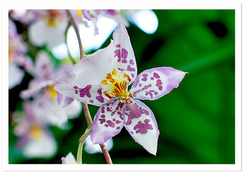 NYBG : Orchid Show