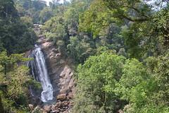 IMG_2326 (y.awanohara) Tags: india green tea kerala plantation teaplantation southindia munnar