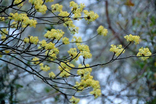 camping: trees in bloom