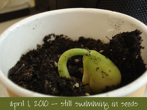 still swimming in seeds