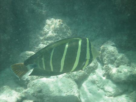 snorkeling13