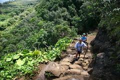 IMG_4410 (ymeng00) Tags: hawaii trail kauai kalalautrail haenastatepark