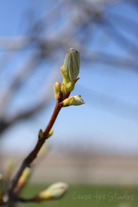 04-15-spring4