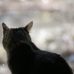 KittyJail