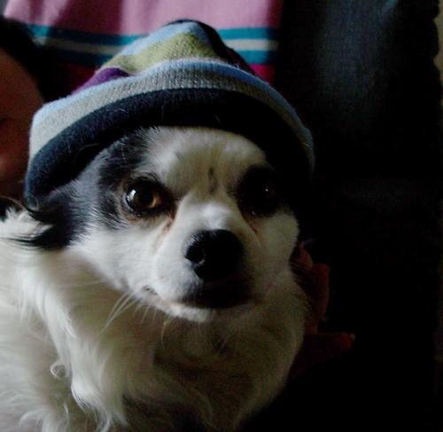 mo mo in a hat