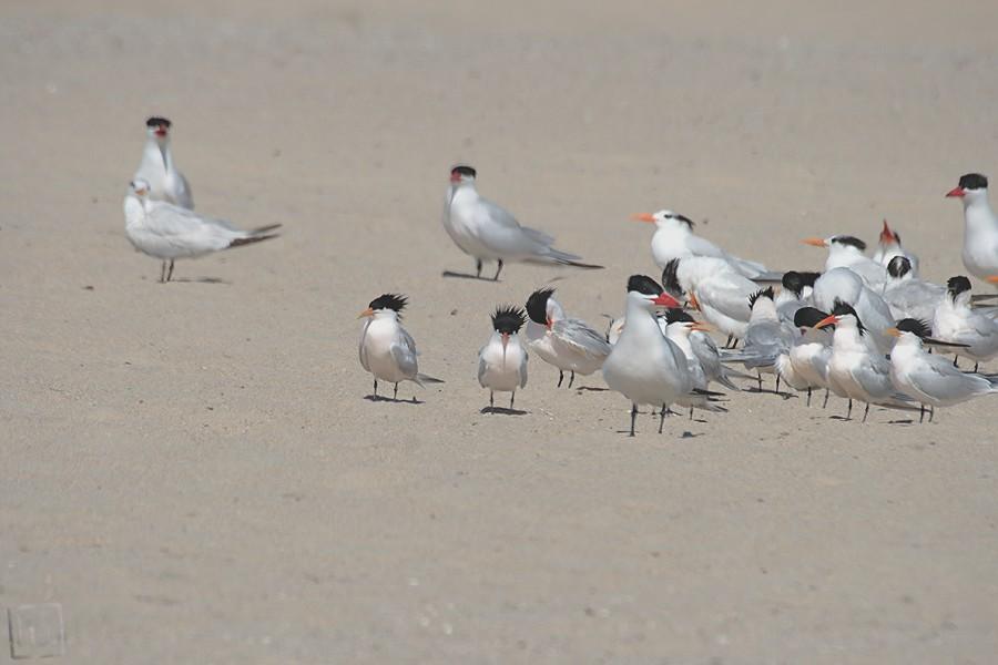 Tern 3-04101