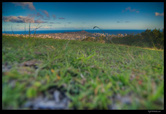 Diamond Head view at Puu Ualakaa Lookout