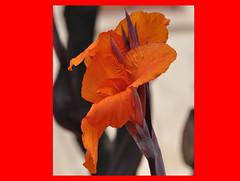 "(pasere) Tags: travel family flowers italy flower macro nature nikon europa europe italia tour natura sicily 1001nights catania trinacria d90 geotagget sicili estremità ortobotanicocatania pasere ""nikonflickraward"" ""flickraward"" paseresphotostream botanicalgardenofcatania sicilianelmondo sicilianinelmondo"