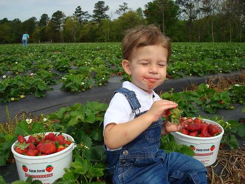 Eating Fresh Strawberries - Yum! Yum!