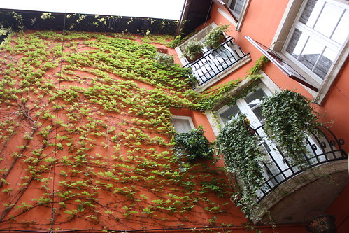 Vine covered walls