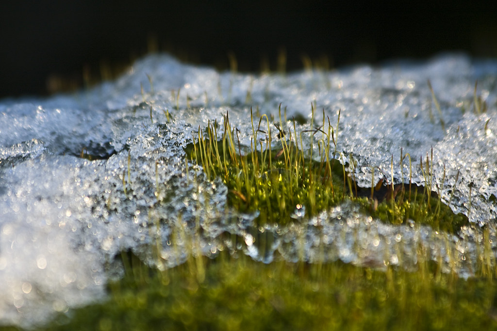 Moss and ice #1 (by storvandre)
