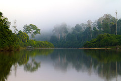0117 The Endau River and its morning mist--Johor , Malaysia (ngchongkin) Tags: niceshot harmony showroom soe johor nationalgeographic musictomyeyes aboveandbeyond favoritephotos 14kgold finegold thegalaxy endaurompin beautifulshot anythingyoulike themagiceye peaceaward avpa flickrhearts flickraward flickrbronzeaward crystalawards heartawards eperkeaward artistsoftheyear betterthangood flickrestrellas royalawards beautifulaward thebestshot highqualityimages spiritofphotography qualifiedmembersonly thebestshots grouptripod photographerparadise artofimages fabbow angelawards visionaryartsgallery youandtheworld pegasusaward flickrsgottalent bestpeopleschoice divinecaptures flickraward5 mygearandme fireworksofphotos artphotographerssalon fabulousplanetevo thehouseofimagegallery betterthangoodlevel2 goldstarawardlevel1 flickrbronzetrophy photographyforrecreationgoldaward chariotsofartists photographyforrecreationsilveraward photographyforrecreationbronzeaward pegasusbronzetrophyaward theelitephotographer digitographer photohobbylevel1 thethreeangelslevel1 theworldinthemyeyes photohobbylevel2 vivalavidalevel1 photosfromworld notanotherstrictgrroup aboveandbeyondlevel1