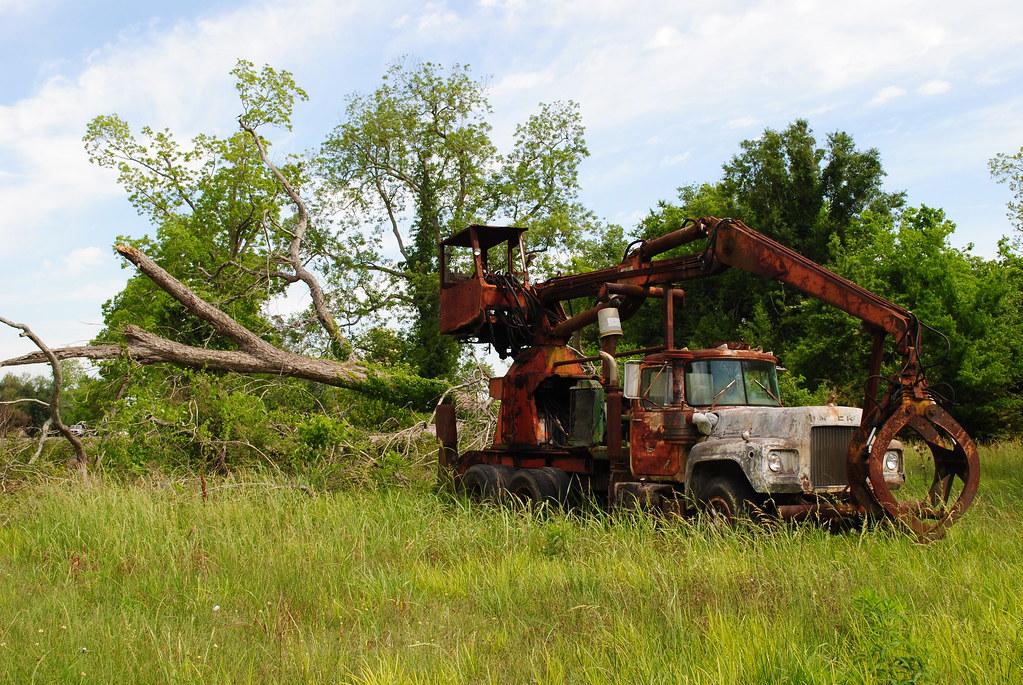 tree, tree truck