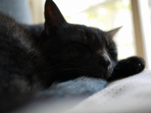 ぷうすけ、寝顔
