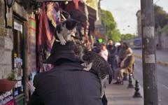 Tussle (Stephen Dowling) Tags: street cats film cat 35mm turkey kittens istanbul bessaflex fujireala100 coliur helios44582