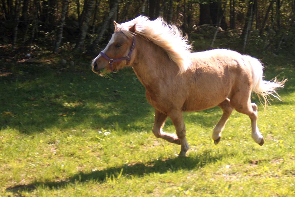 horses 107x