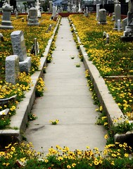 Benign Neglect, Evergreen Cemetery, Galveston, Texas 0513101530 (Patrick Feller) Tags: evergreencemetery cemetery galveston broadway galvestoncounty yellow wildflowers convergence perspective perspectiva texas graveyard graves tombstones united states north america