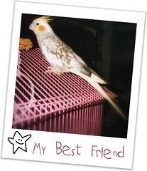 Ellie 2 (cherryblossom1) Tags: pet cute bird beautiful yellow grey friend feathers adorable ellie cockatiel bestfriend thefunhouse photographsandmemories thisphotorocks beautyunnoticed