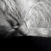 che sogni? (archifra -francesco de vincenzi-) Tags: bw italy cat chat riposo gato gatto sonno bianconero ciccio ohhh molise serenità blackwhitephotos archifraisernia francescodevincenzi