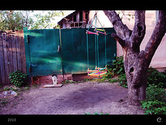 2010_05_15_Sergiev_Posad_19_yard (synthsnow) Tags: tree yard cat country seesaw качели дерево кот sergievposad двор деревня сергиевпосад