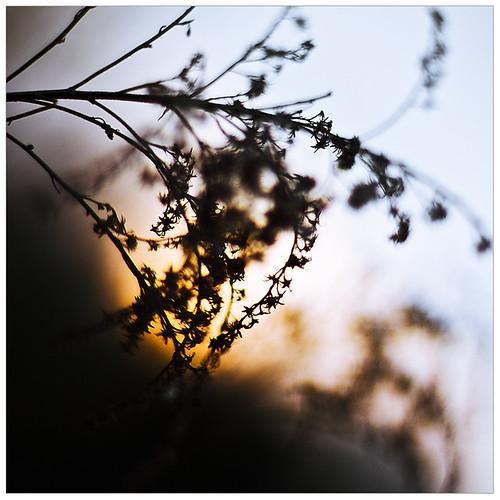 herbal in backlight