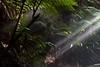 Australian National Botanic Gardens (photo obsessed) Tags: gardens botanic