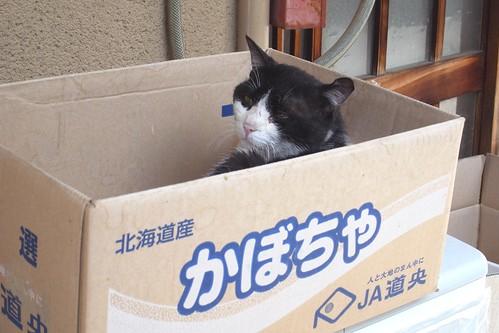 Today's Cat@2010-05-29