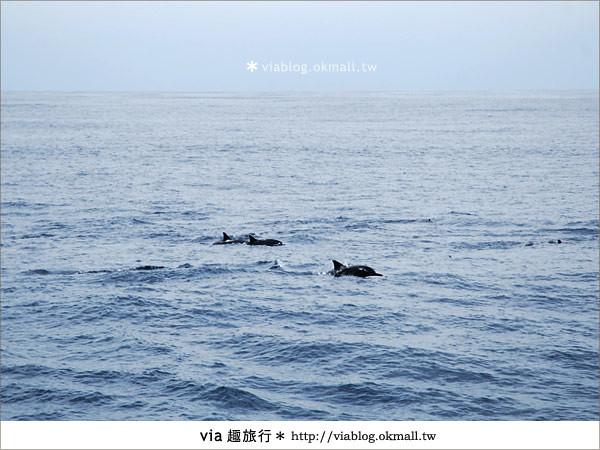 【花蓮賞鯨】花蓮玩樂趣~花蓮賞鯨之旅16