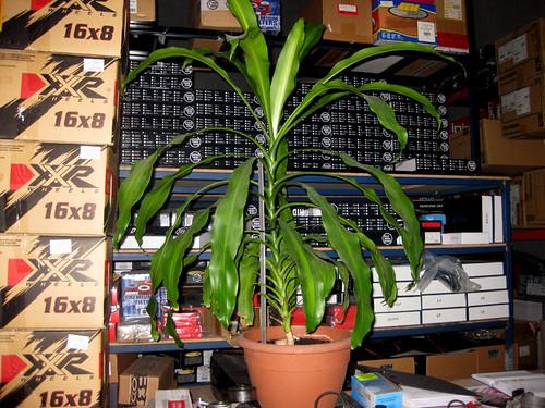 happy-plant