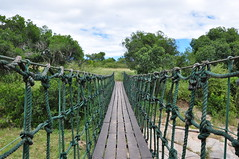 Hanging Bridge (Haythum) Tags: kenya safari masaimara nikond90 intrepidscamp