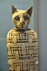 egyptian cat, looking slightly startled to have been mummified (Jennie Filer Photography) Tags: england london history museum cat death ancient nikon may egypt culture bloomsbury egyptian figure mummy britishmuseum ancientegypt mummified artefacts wc1 d90 nikond90