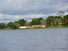 Na margem direita do rio Amazonas - Amazonia Brasil (Wilmar Santin) Tags: brazil brasil casa am amazon brasilien paisagem amazonas brsil amazonia amaznia amazone amazzonia rioamazonas ribeirinha amazonien riodelleamazzoni casaribeirinha paisagemamaznica careirodavarzea paisagemribeirinha paisagemribeirinhaamaznica