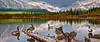 Goosing Around (Luke Austin) Tags: lake canada mountains rockies geese nationalpark spring goose alberta banff vermillion canadianlandscape lukeaustin nikond3x