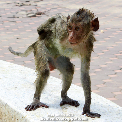 monkey scratching butt