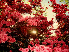 Gorgeous Pink (puszka) Tags: california nyc flowers wedding sunset summer vacation music newyork slr london art love beach nature sunrise canon geotagged google amazing interesting nikon live fave national dslr geographic explored